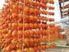 和歌山・かつらぎ町で串柿作り最盛期 カキの玉のれん、例年よりも遅めの「見頃」