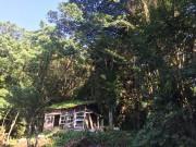 屋久島の長期アートプロジェクト、5年目の夏 「山」テーマに展覧会や登山