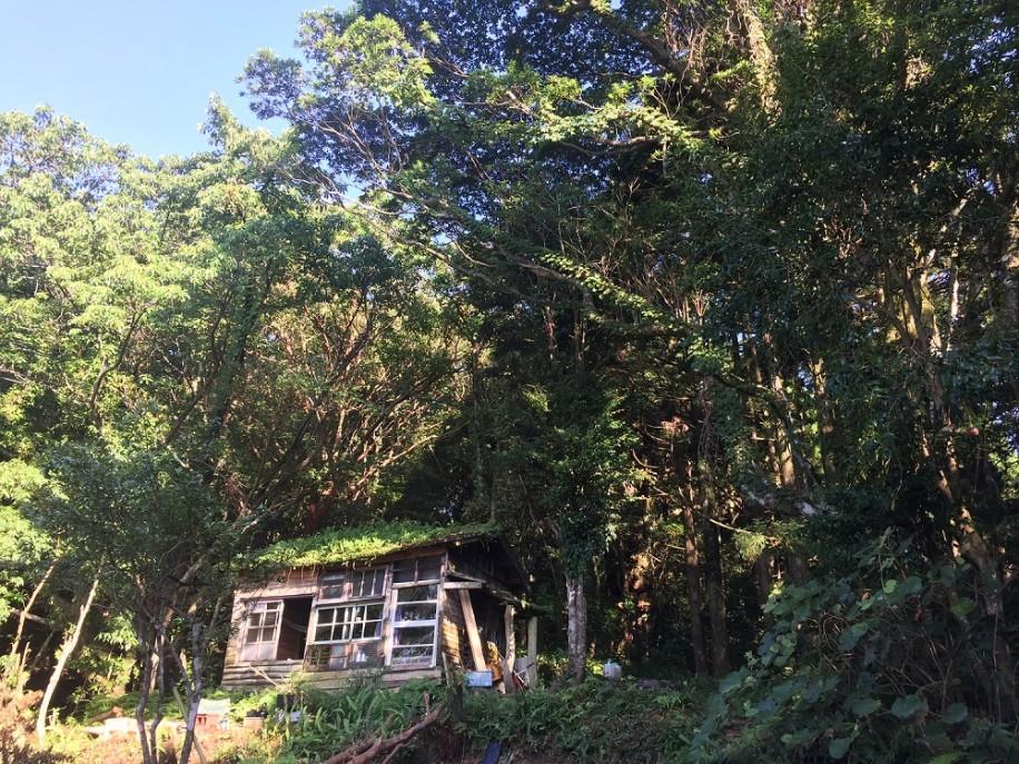 今回のプロジェクトの拠点となった森の中の小屋