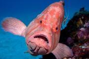 屋久島の写真絵本「アザハタ王と海底城」 不思議な魚の生態伝える