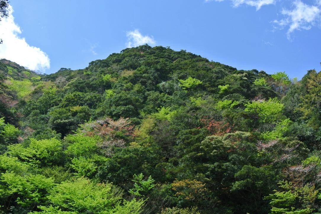 白谷雲水峡線から見る新緑とヤマザクラ