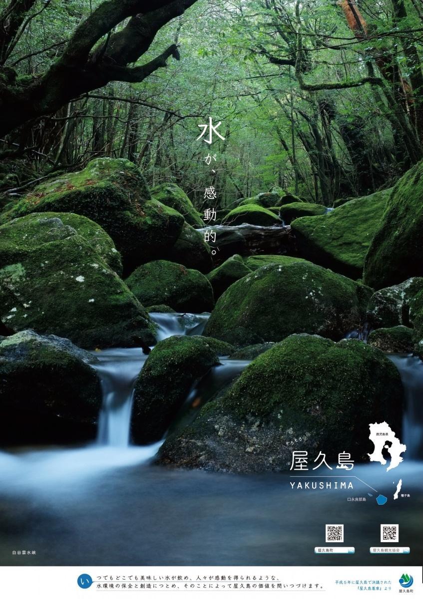 屋久島の水を代表する風景・白谷雲水峡の沢