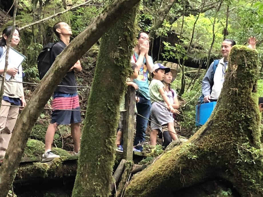 「仏陀(ぶっだ)杉」が伐採を免れた理由を聞く参加者たち