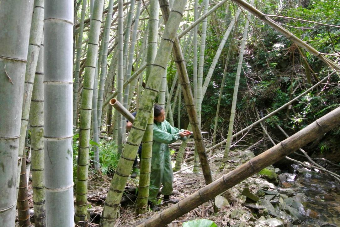 竹林を整備する様子