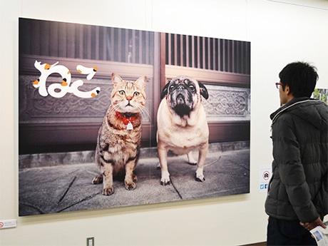 芸文美術館で開催中の岩合光昭さん写真展「ねこ」