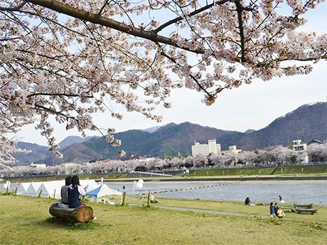 馬見ヶ崎川の桜(4月12日撮影)