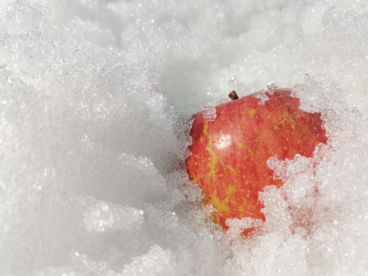 「雪りんご」