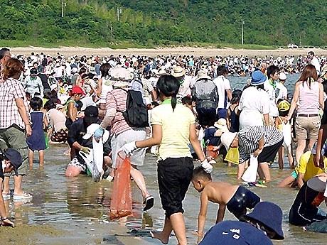 山口・秋穂の中道海水浴場で車えびを捕まえる参加者(昨年の様子)