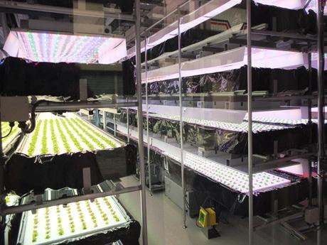 空き店舗を活用して室内で野菜を栽培する「ウベモクファーム」