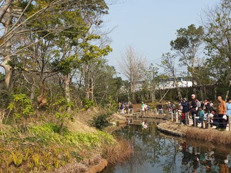 ときわ動物園オープン直後のにぎわう園内