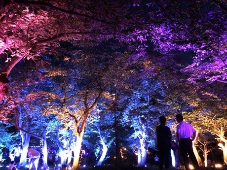 ときわ湖水ホール近くの桜山から見た「呼応する森」