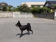 山口宇部空港近くに「ドッグラン」 獣医師運営のペット複合施設に併設