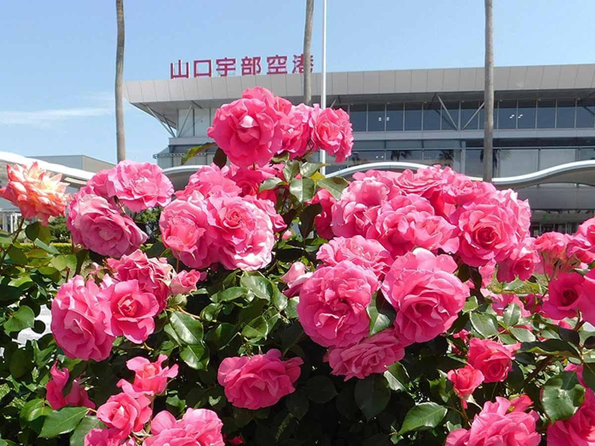 170品種・1000株のバラが咲きそろう山口宇部空港のバラ園