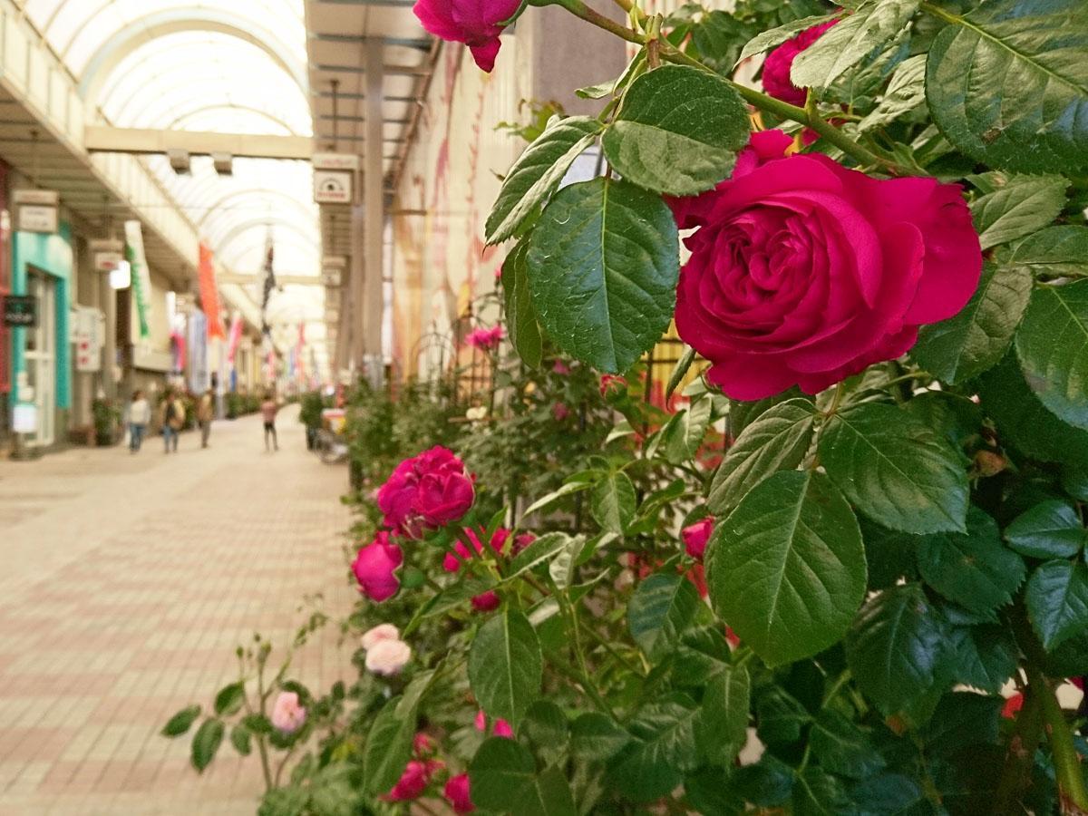 新天町アーケード内では約200鉢のバラが鑑賞できる