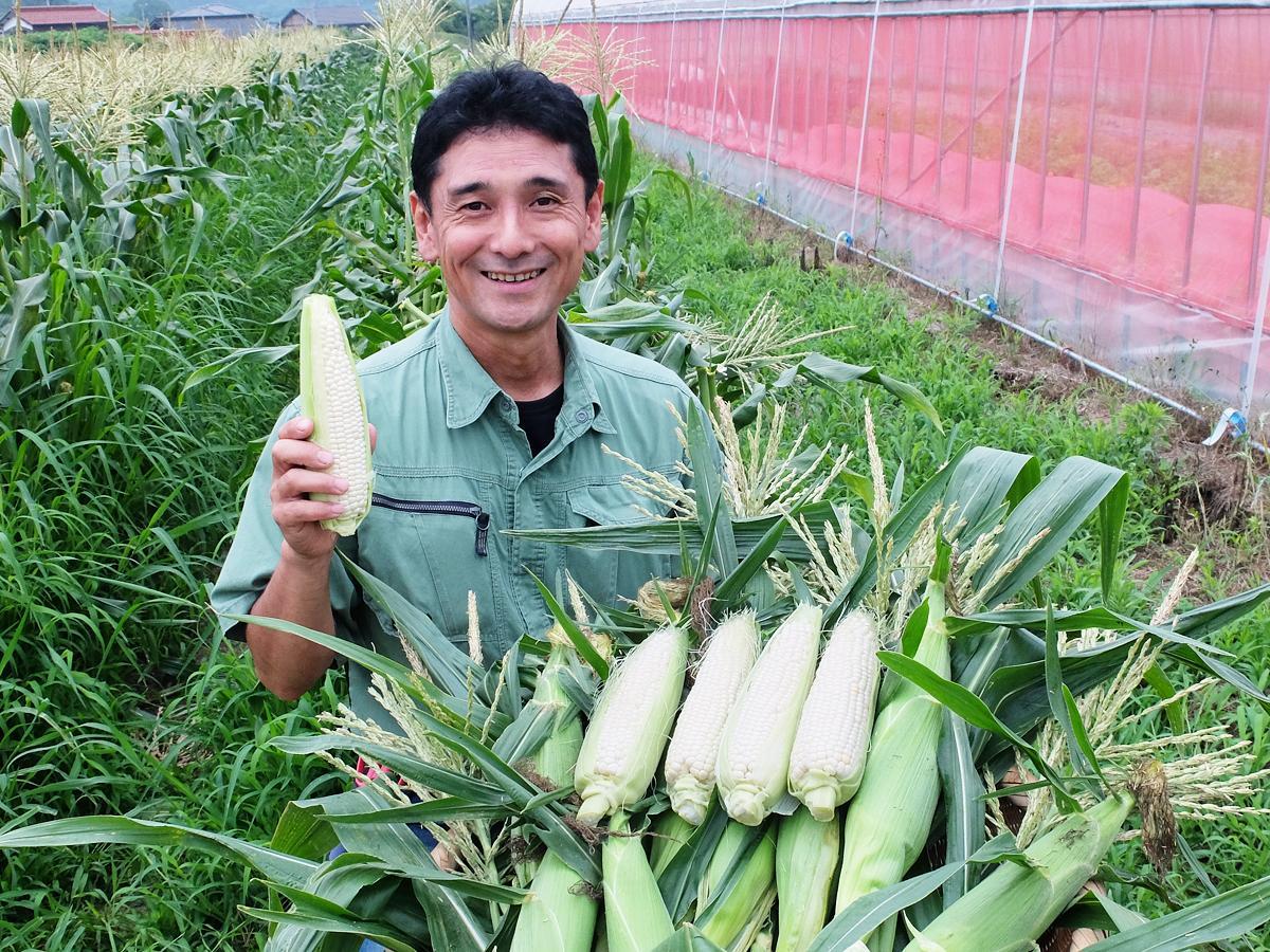 作付面積10アールの畑で、白いトウモロコシを生産する戎谷さん