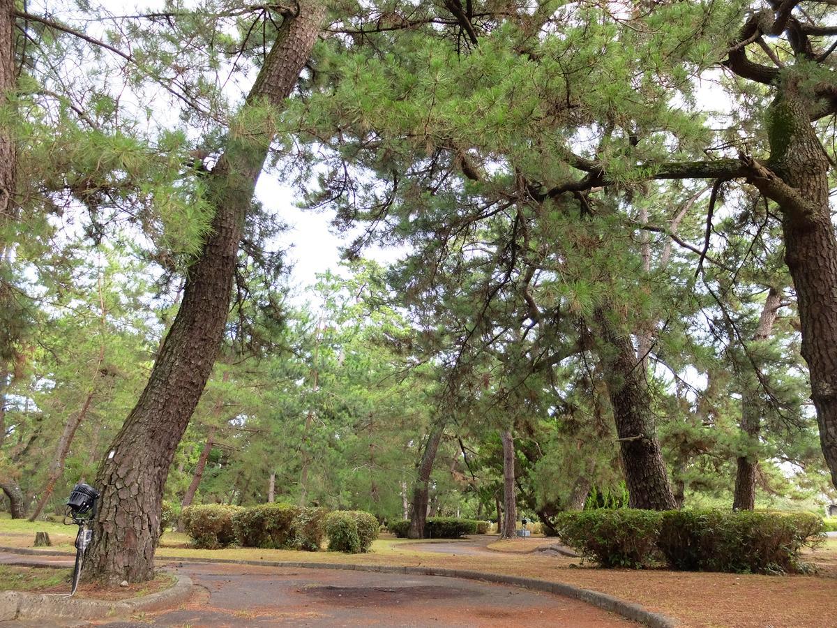 遊歩道が整備されている「糸根の松原」