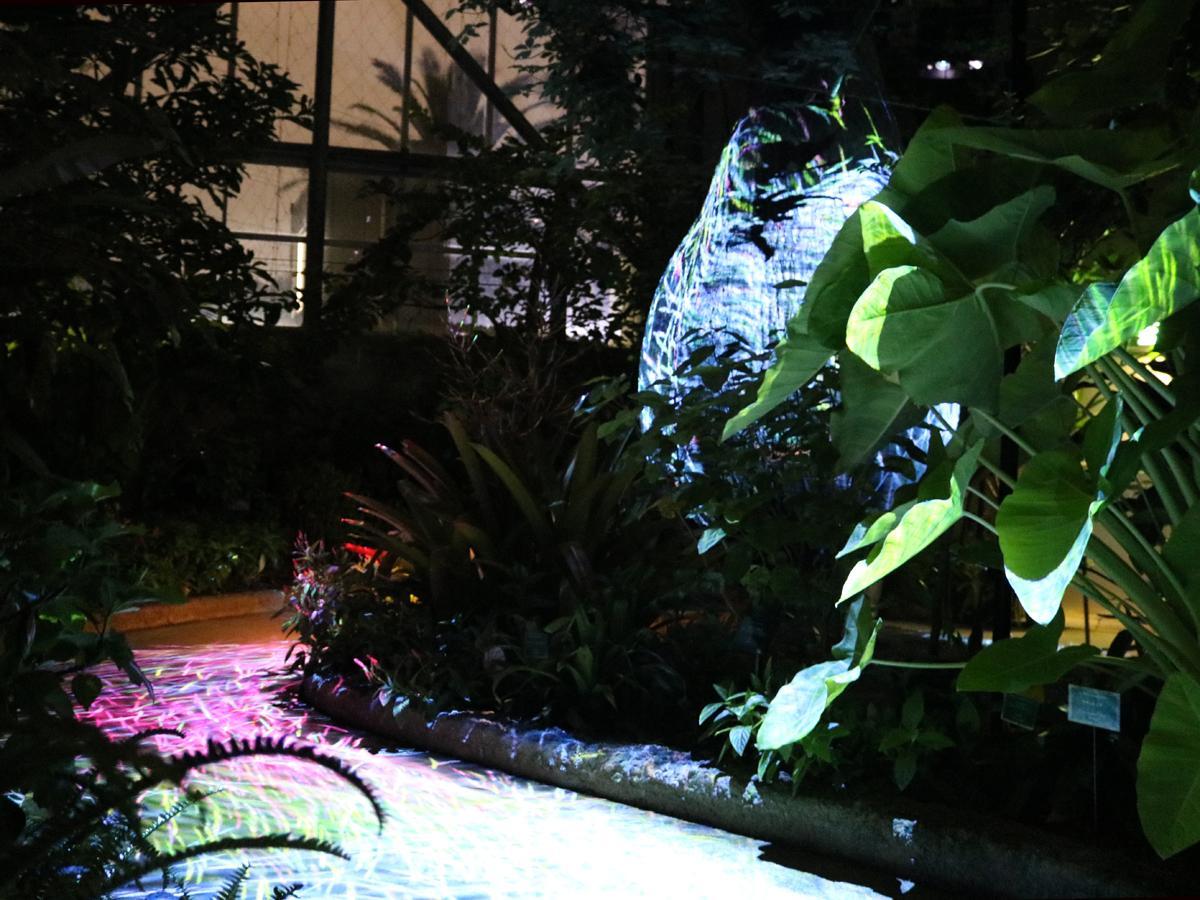 宇部ときわ公園×チームラボ、デジタルアート展 初の室内展示も