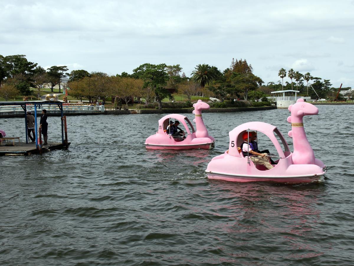 宇部ときわ湖で行われた「スワンボートレース大会」