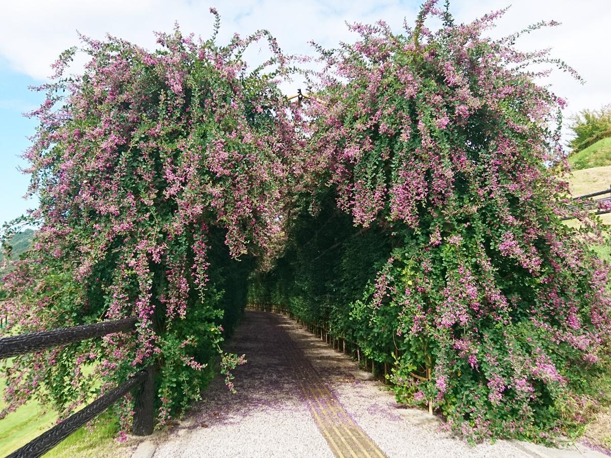 萩で「日本一長い」ハギの花トンネルが見頃 万葉集にゆかり、市名の由来とも