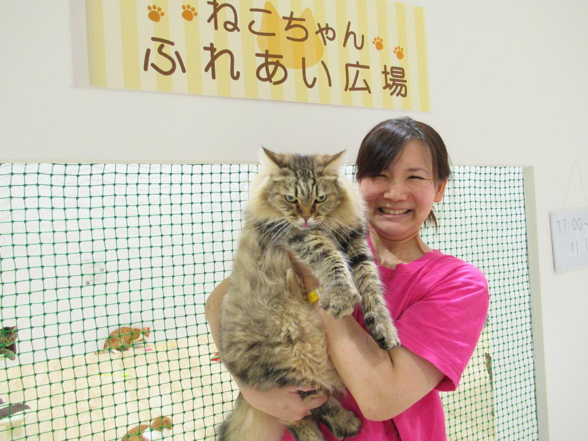 アメリカ原産の「ラガマフィン」と飼育員の矢野優子さん