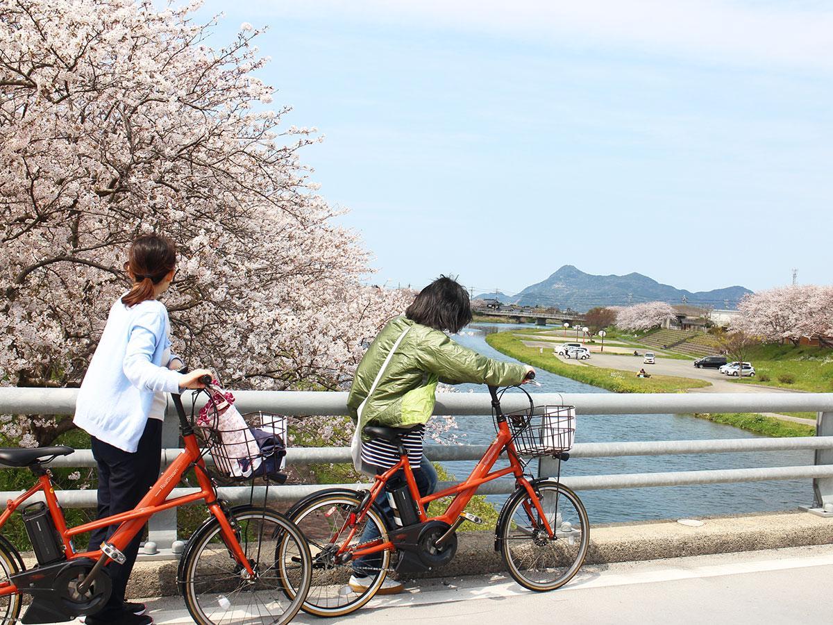自転車で桜巡りを楽しむ様子(写真提供=長門市観光コンベンション協会)