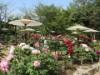 宇部ときわ公園で「ボタンまつり」初開催へ 花で「園の新たな魅力」発信