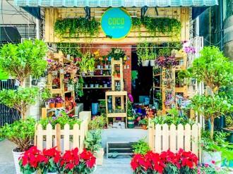 ヤンゴンに外国産の植物プラントショップ「CoCo」 50種超を販売