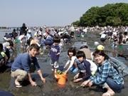 東京湾名物の走水「潮干狩り」に2千人超-GW初日の横須賀で