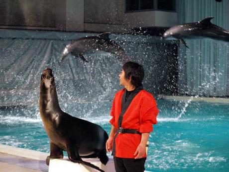 京急油壺マリンパークの名物、イルカとアシカのパフォーマンス