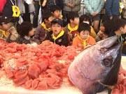 福島の子どもたち、三崎魚市場を体験-まぐろ解体ショーに歓声も