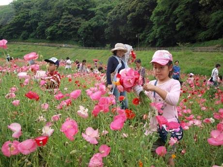 赤やピンクに彩られたポピーの花摘みを楽しむ子どもたち