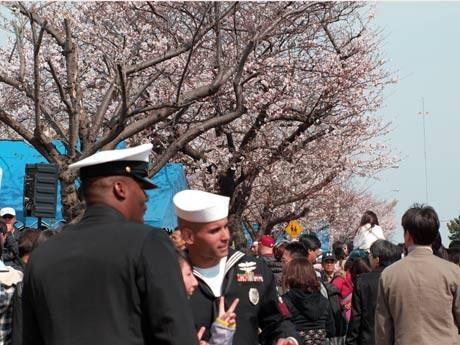 基地内の桜も満開。米海軍兵士らと記念撮影する市民たちも(米海軍横須賀基地)