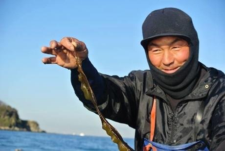 猿島産わかめの若葉「さるひめ」を収獲する漁師・譲原亮さん