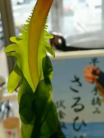 無人島・猿島産、早取りわかめ「さるひめ」好評 横須賀で収獲シーズン