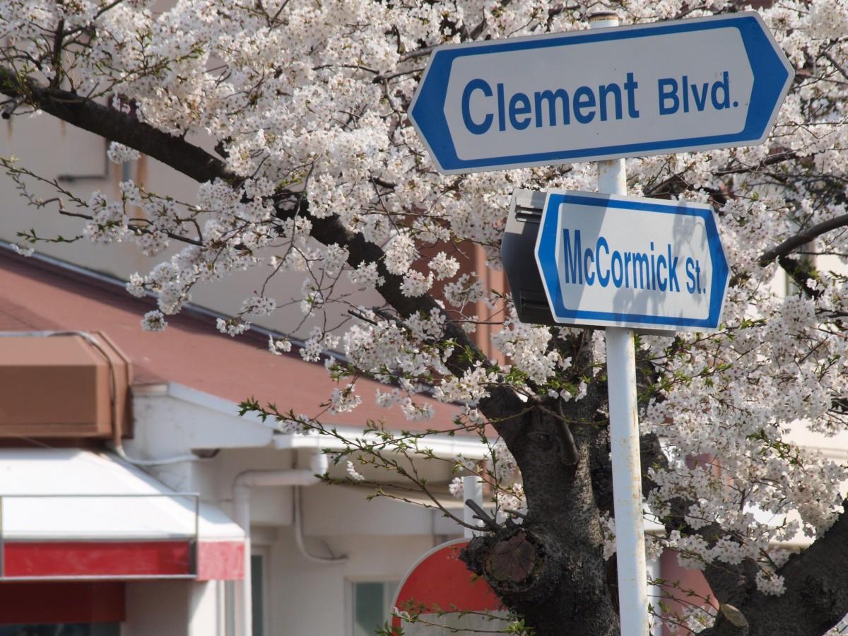 桜並木のあるクレメント通り(米海軍横須賀基地内)