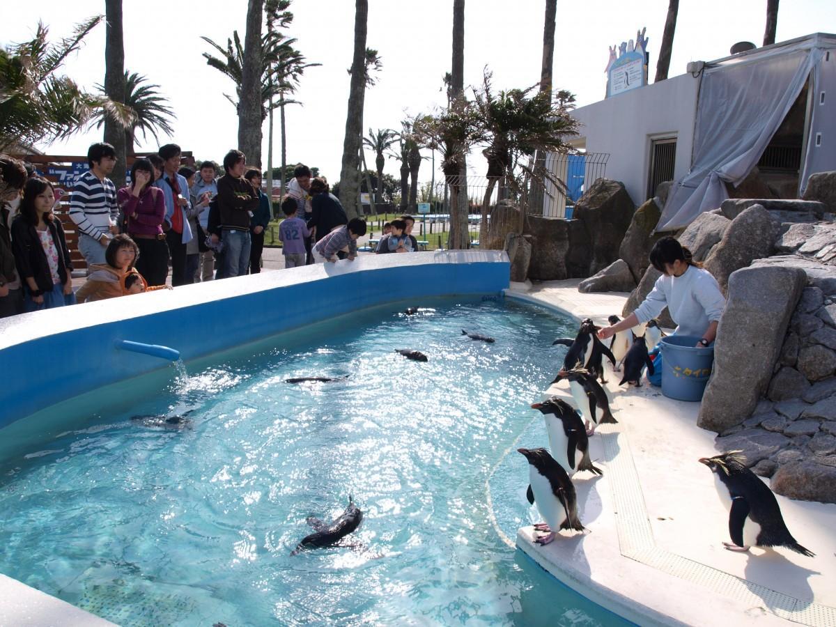 キタイワトビペンギンの飼育や生態展示でも知られる京急油壷マリンパーク