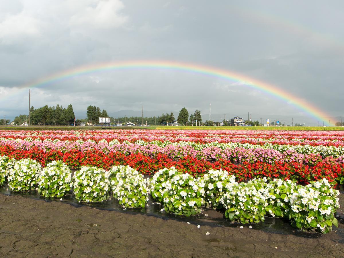 横手市大雄の「たいゆう緑花園」