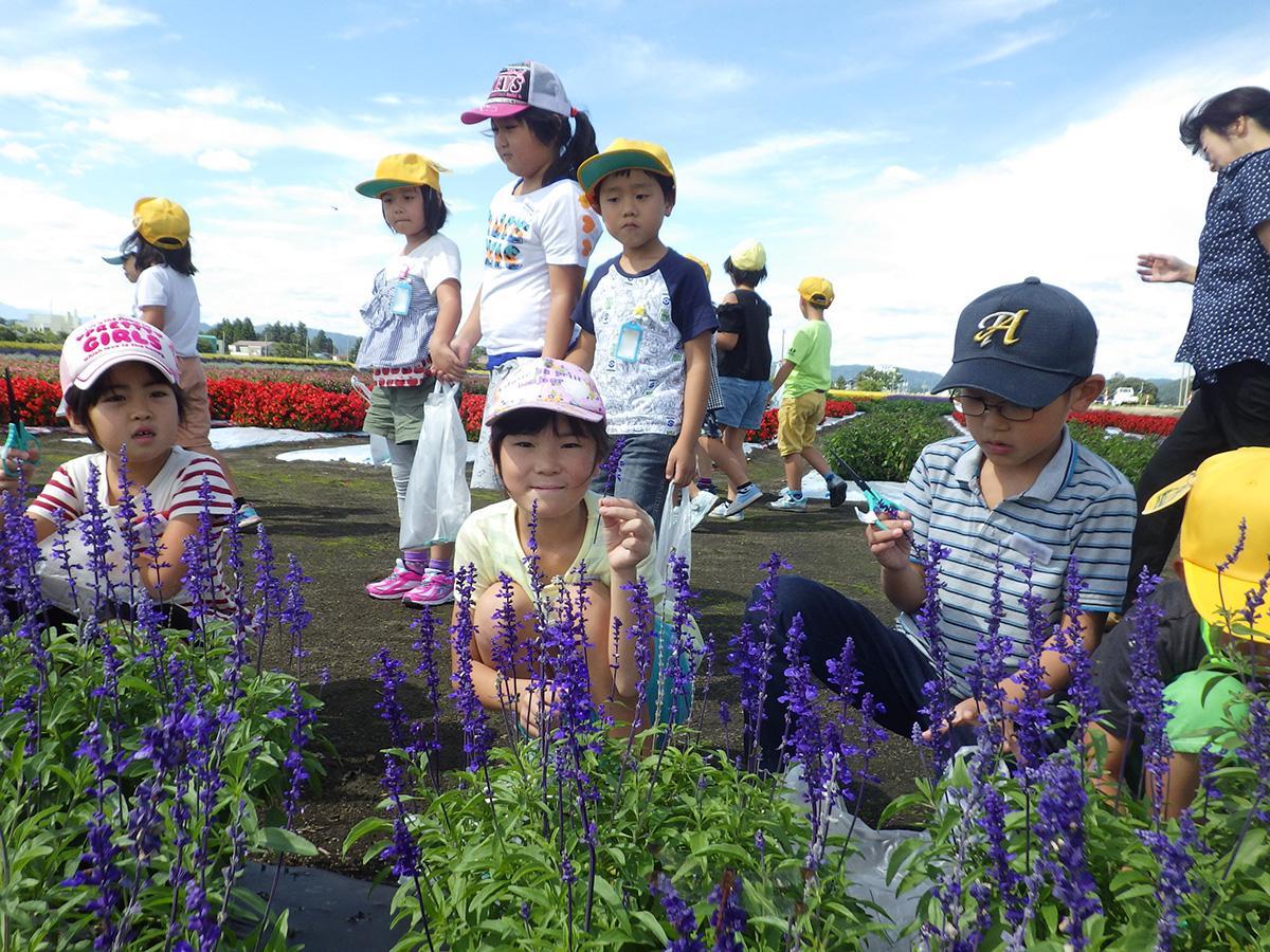 「たいゆう緑花園」で行われた花摘みの様子