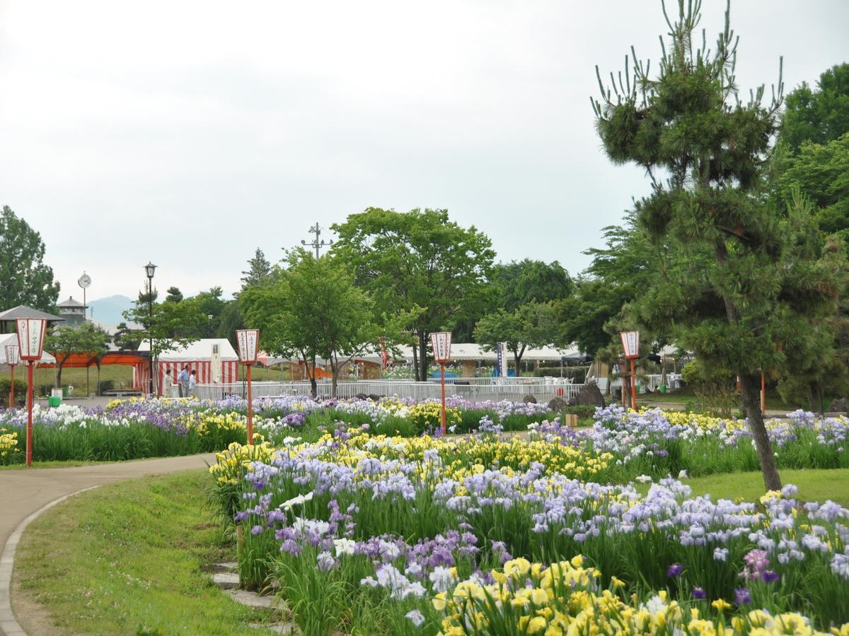 横手市の「浅舞公園あやめまつり」の様子(写真は2017年)