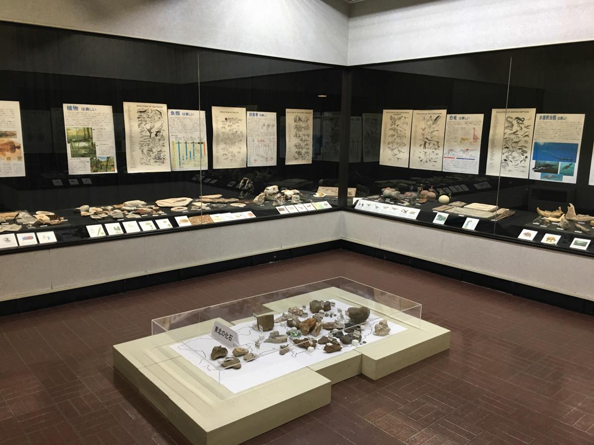 横手市雄物川郷土資料館で開催中の「進化の造形 美しい化石たち」
