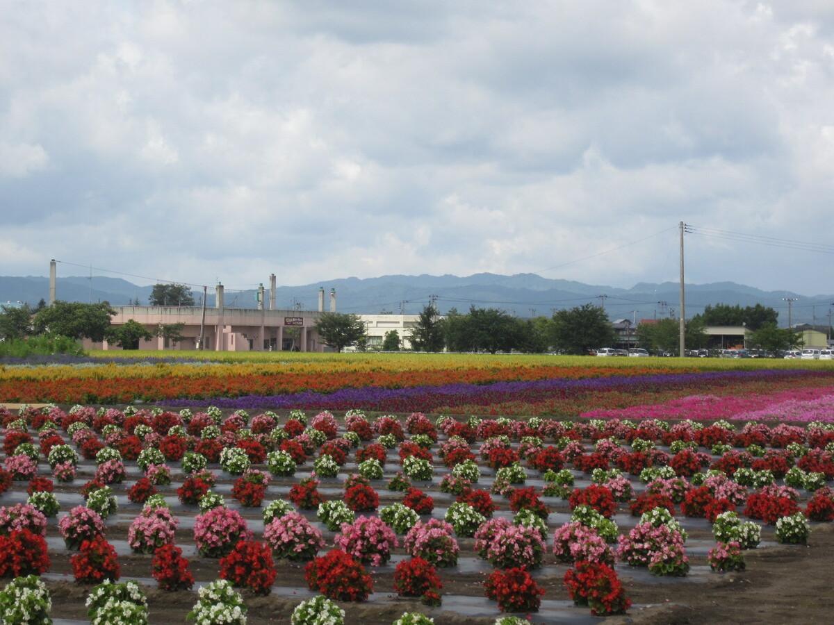 横手市で開かれた「緑花園パノラマフェスタ」会場の様子
