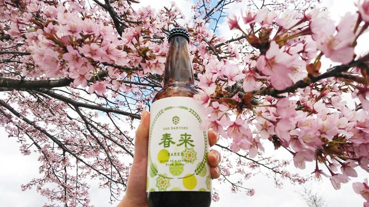 羽後麦酒で販売する「春来エール」