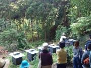 逗子で唯一の養蜂家、3年目の最盛期迎える ワークショップも