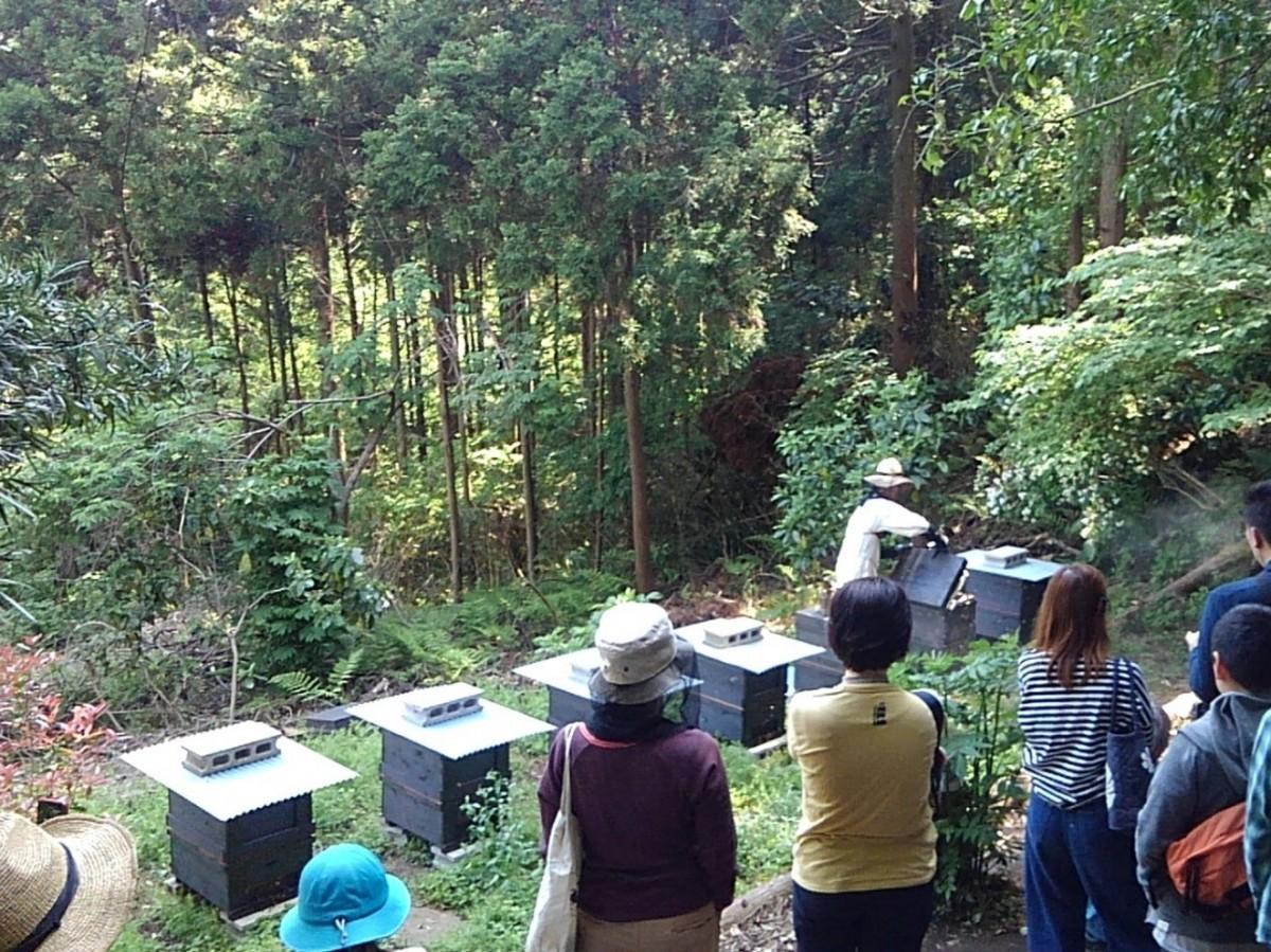 巣箱の前で、ワークショップの参加者に説明する林さん