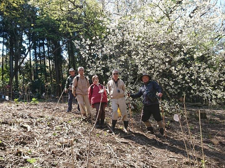 阿部倉山の桜と保全の会のメンバー(提供=阿部倉山の森保全の会)