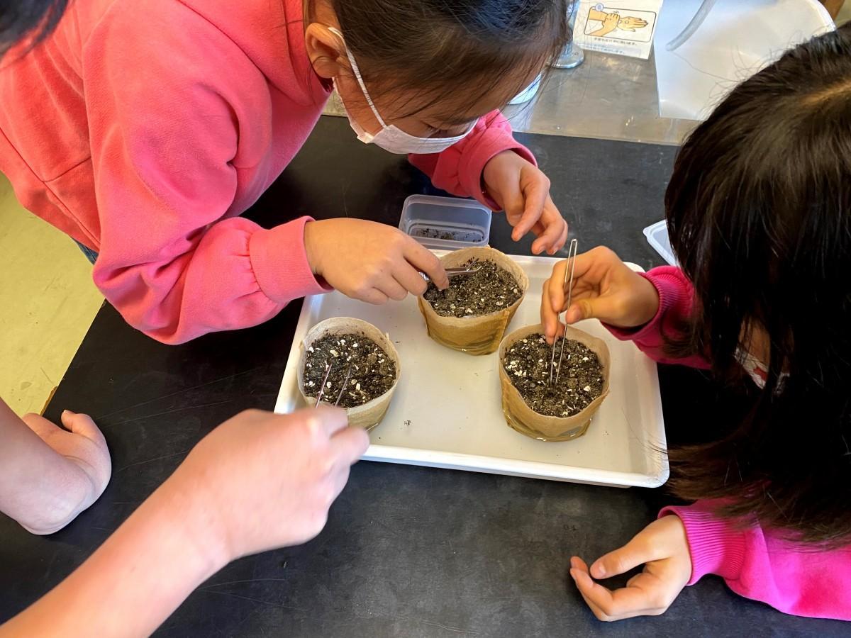 米粒ほどの大きさの「アマモの種」を慎重に育成用ポットの中に植える児童たち